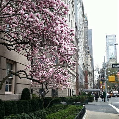 Spring on Fifth Ave - Photocred: Yours Truly
