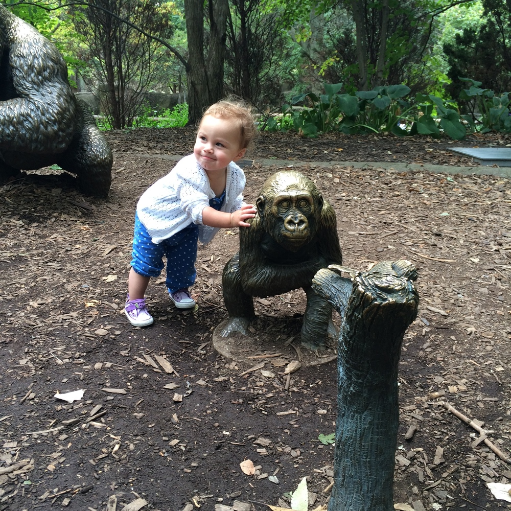 :: my little monkey at the lincoln park zoo, chicago ::