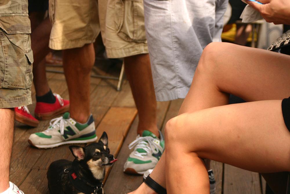 sassy dog......definitely a real New Yorker