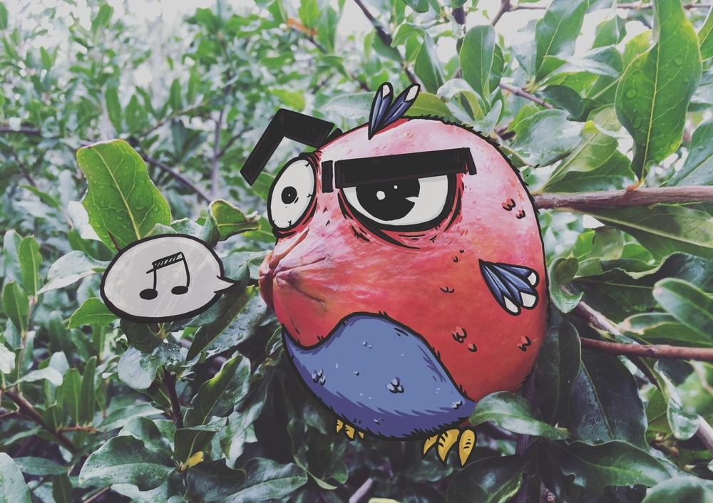 Pomegranate parrot