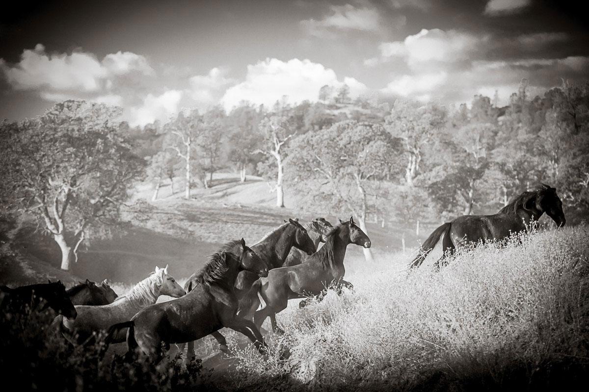 The Wild Horse Herd — Montgomery Creek Ranch