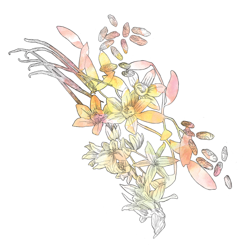 Floral Illustration | Packaging | Beauty | Feminine | London based illustrator Willa Gebbie