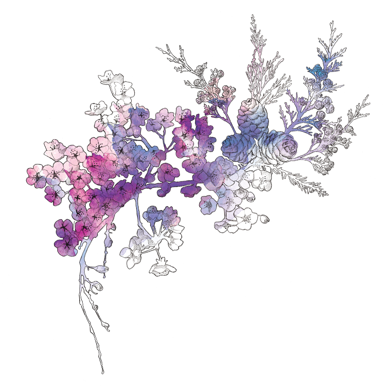 Floral Illustration | Packaging| Beauty | Feminine | London based illustrator Willa Gebbie