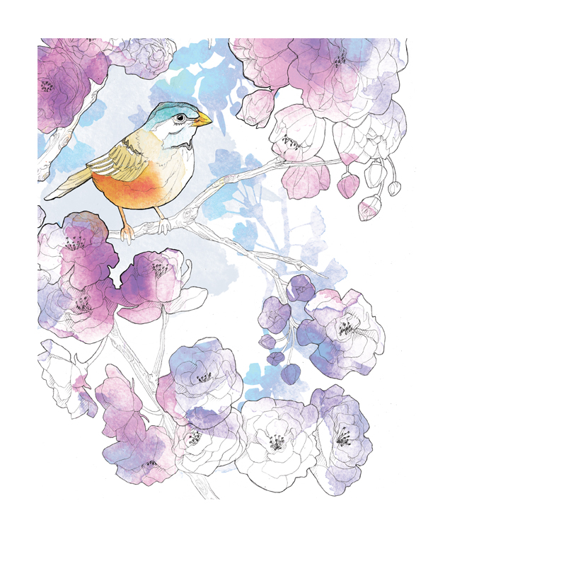 Floral Illustration | Packaging | Birds | Animals | Feminine | London based illustrator Willa Gebbie