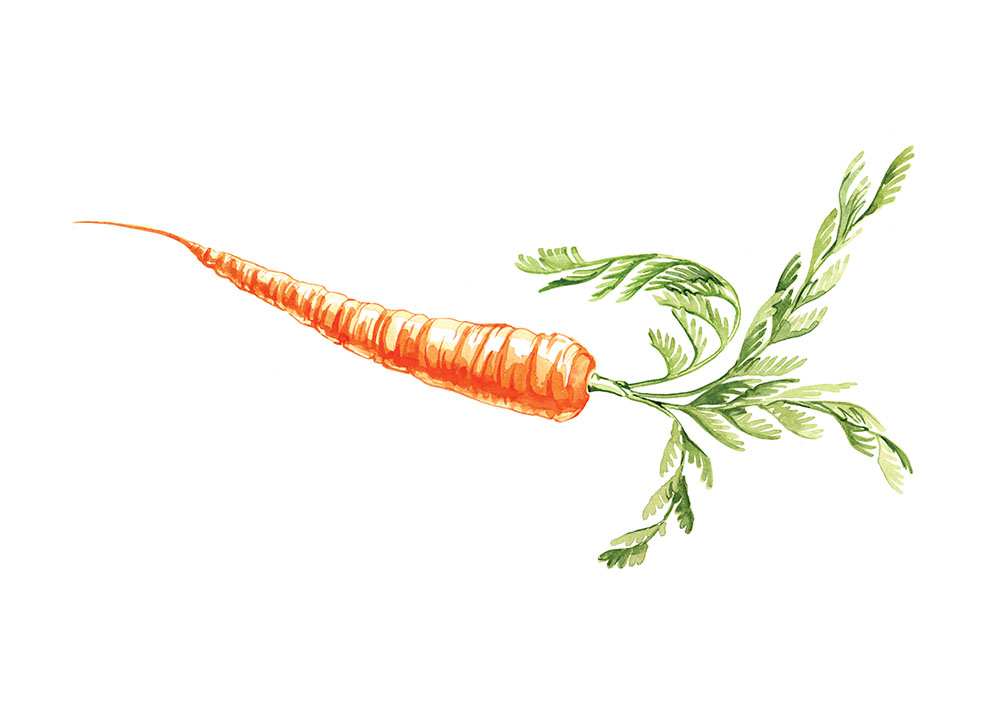 Willa Gebbie food illustration for M&S