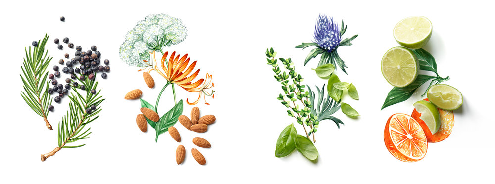 Willa Gebbie watercolour food illustration for Waitrose magazine with photography