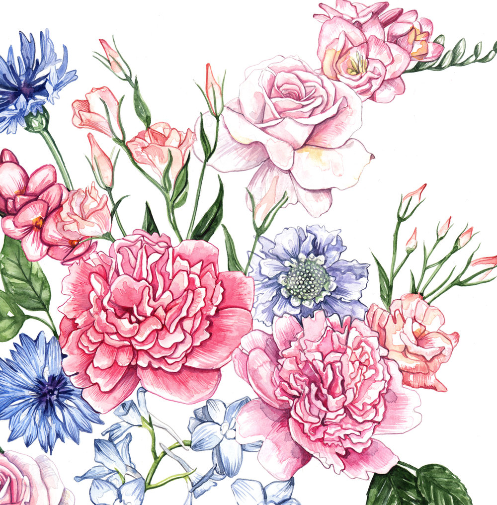 Floral, Flower, Botanical illustration Watercolour Illustration