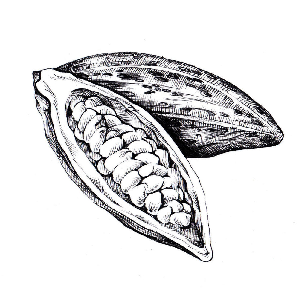 pen ink food illustrations cacao fruit