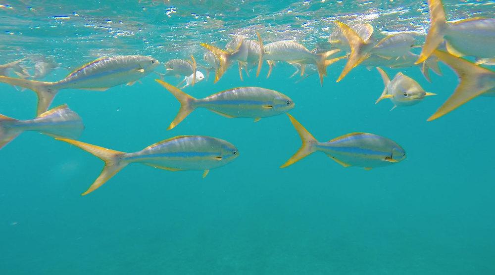 rainbow-fish-snorkeling.jpg