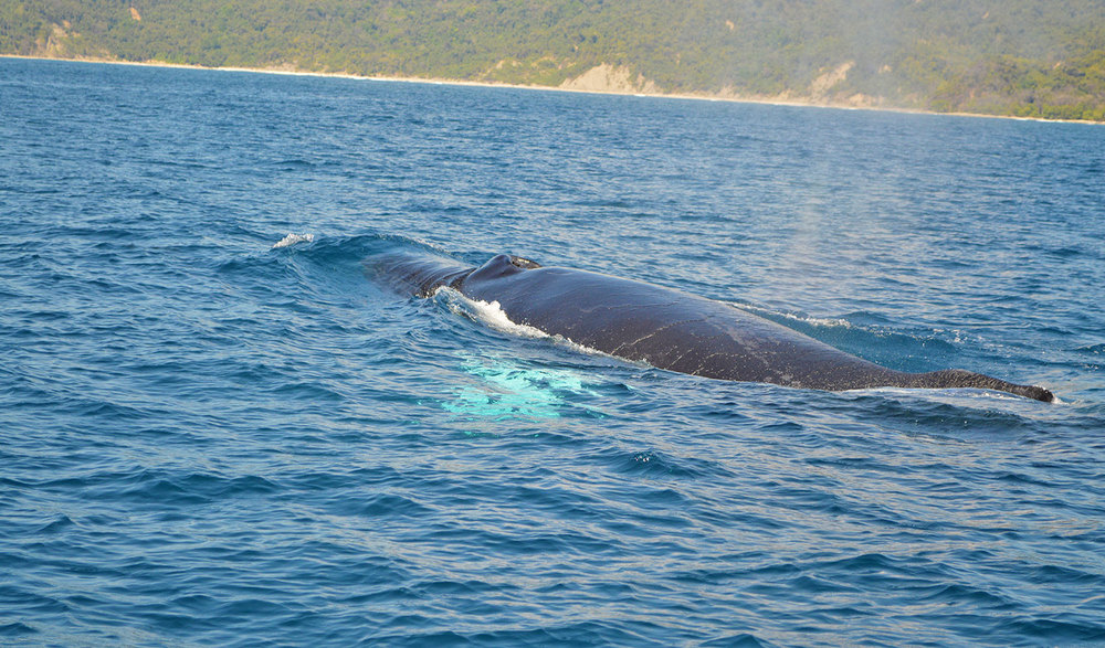 whale-watching-off-the-mal-pais-coast.jpg