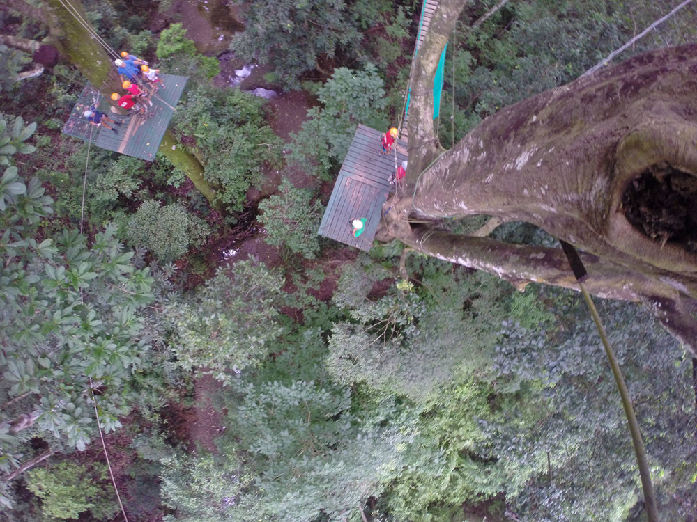 tree-top-canopy-view.jpg
