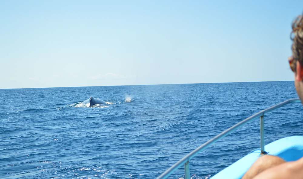 Watching a whale break at close proximity... priceless!