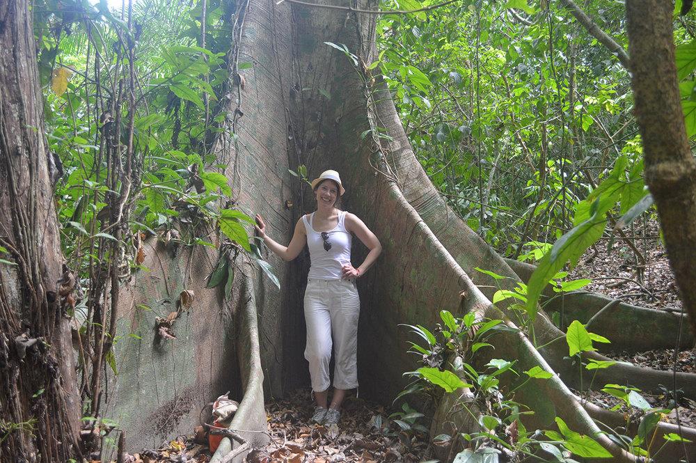 higeron-massive-tree-cabo-blanco.jpg