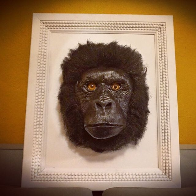 Finished a Mountain Gorilla just in time for the holidays!  #wildeanimals #mountaingorilla #fauxtaxidermy #endangeredart #endangeredspecies