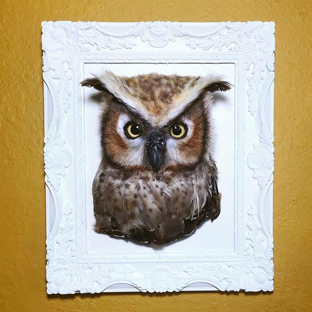 The latest commissioned Wilde Animal Head- a Great Horned Owl! • • While the Great Horned Owls are not endangered, the person who purchased this owl is giving it to his son for his birthday because his son is fascinated by owls! I'm always open to creating custom animal heads! Just shoot me a message if interested!• • • • #fauxtaxidermy #greathornedowl #owl #endangeredart #makeadifference #smallchanges #faketaxidermy #sculpture #animalsculpture #birdsofinstagram #owlsofinstagram