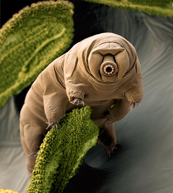 tardigrade.jpg