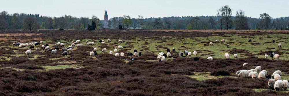Drenthe1021.jpg