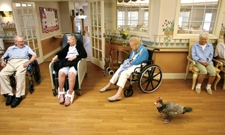 assisted living slip and fall treatment