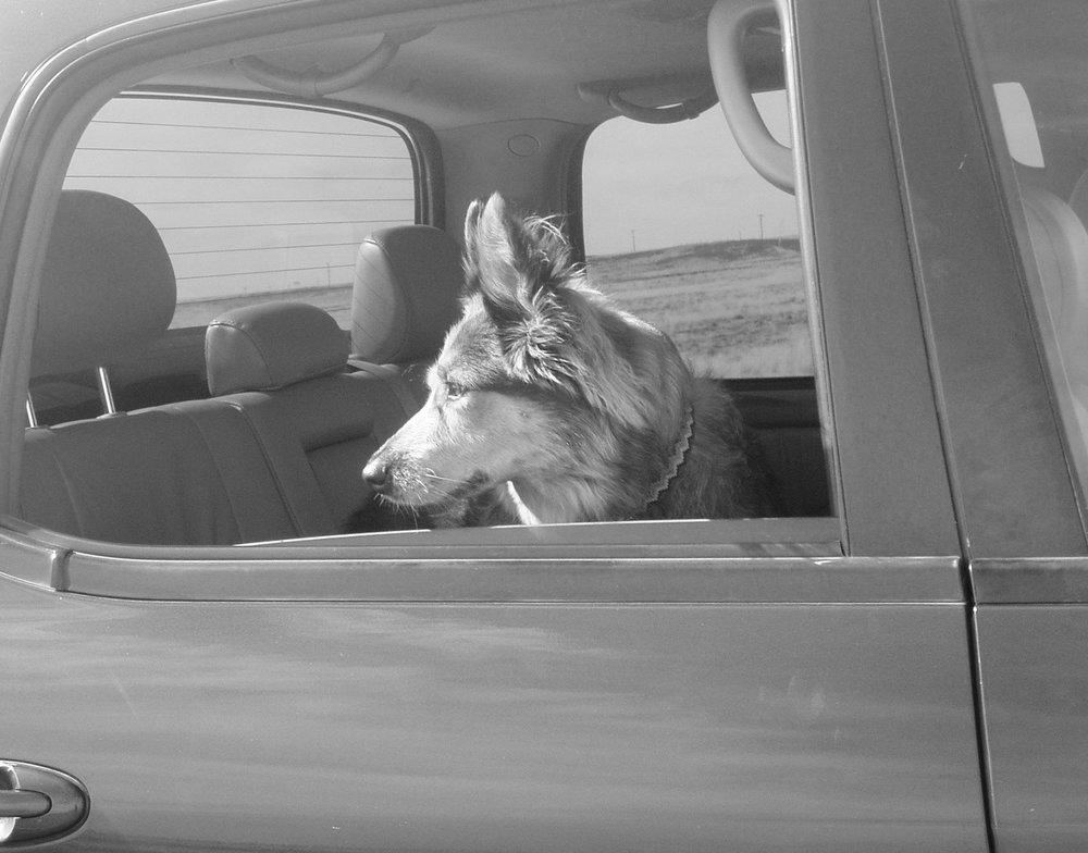 Sonoita The Dog