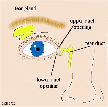 lacrimal duct