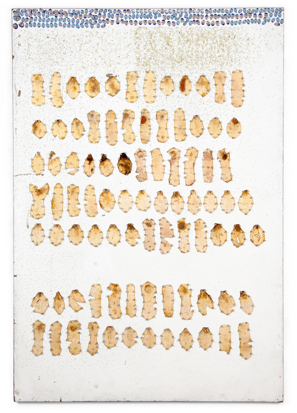 "Peel, Unpeel & Push  (process board), 2015. Tangelo peel and push pins on painted homasote. 72"" x 48"""