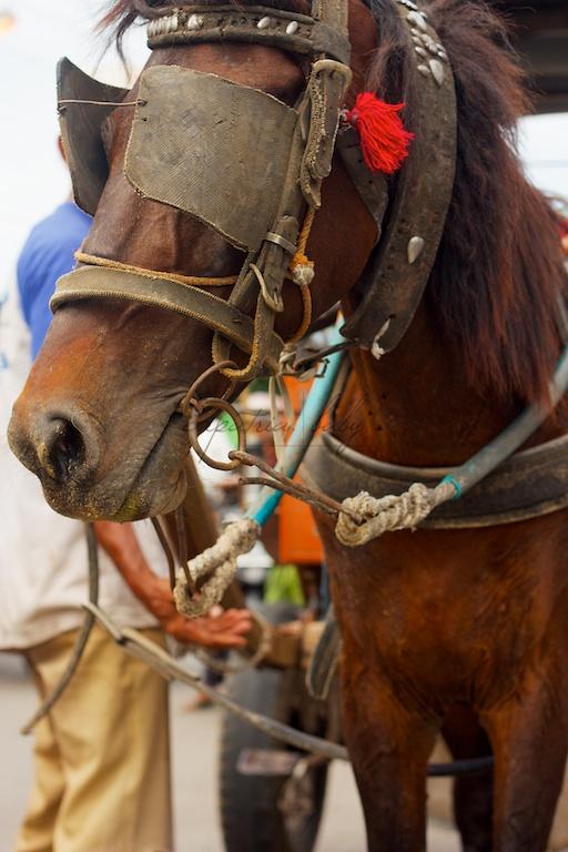 indonesian pony cart