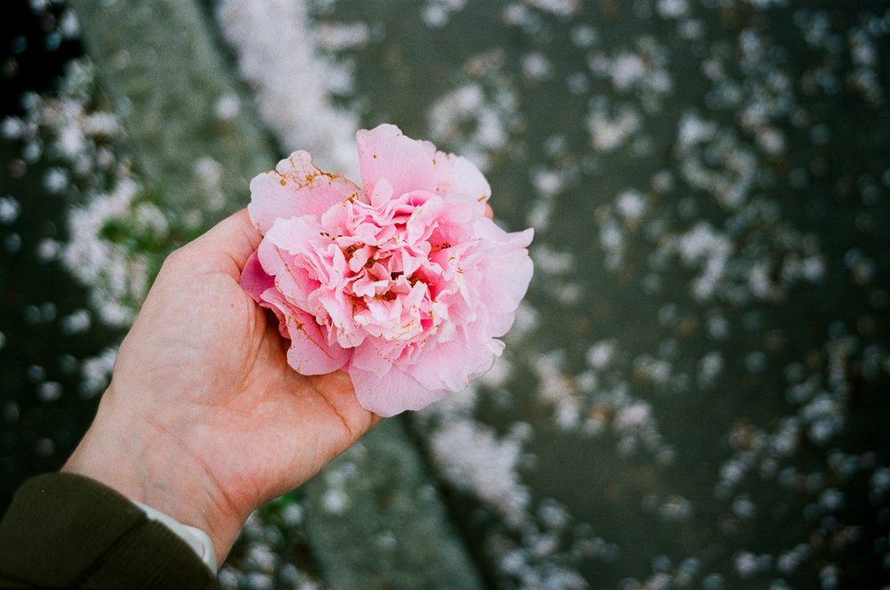 kuala lumpur based photographer holds a rose in her hand