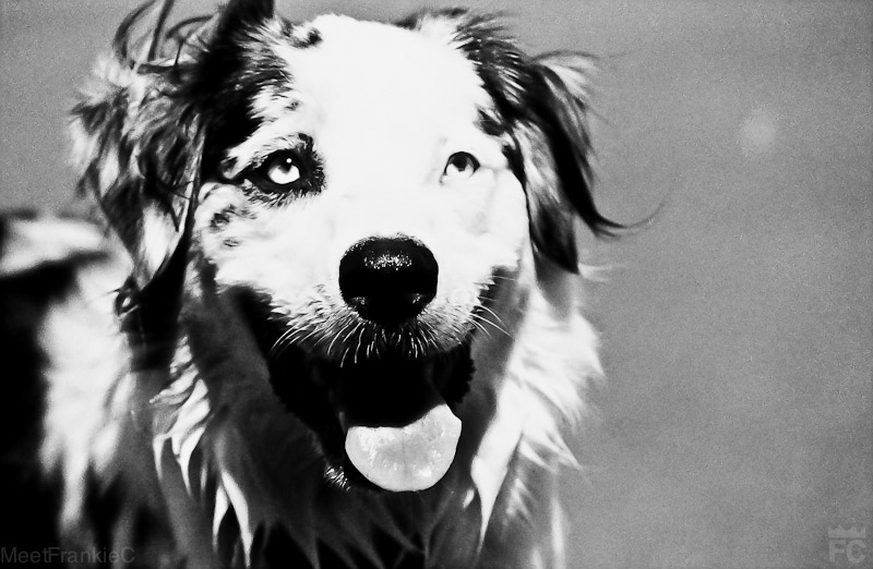 Dog with pretty eyes- 120 film Frankie C