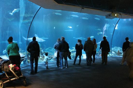 chicago-shedd-aquarium.jpg