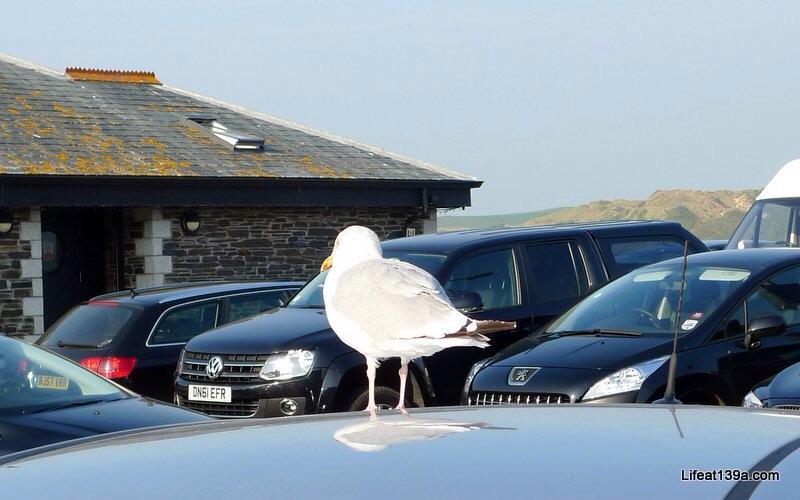 Sun on Saturday: Padstow, Cornwall