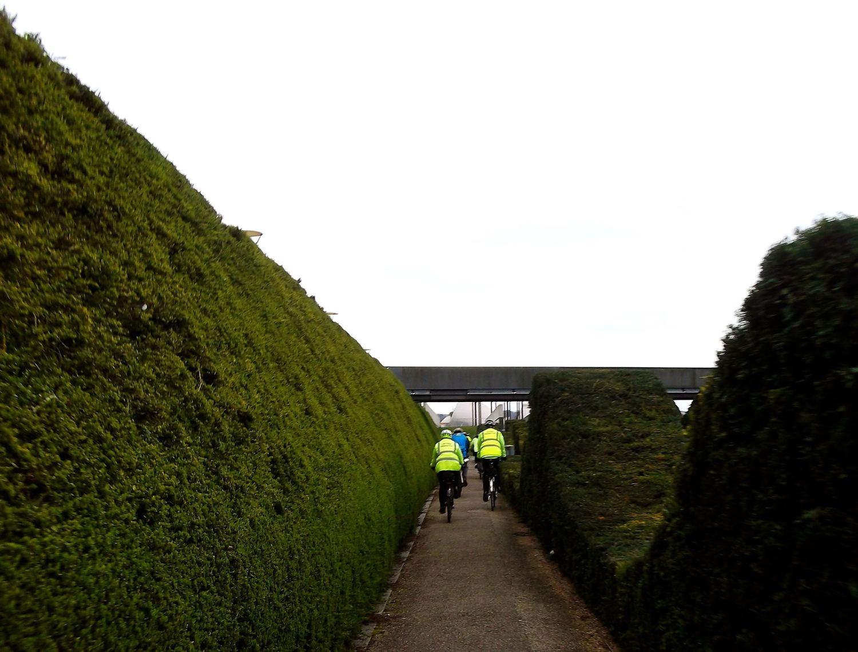 Hedges at the Thames Barrier Park