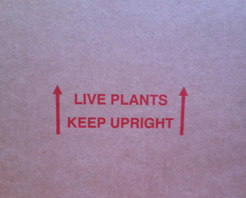Live Plants - Keep Upright