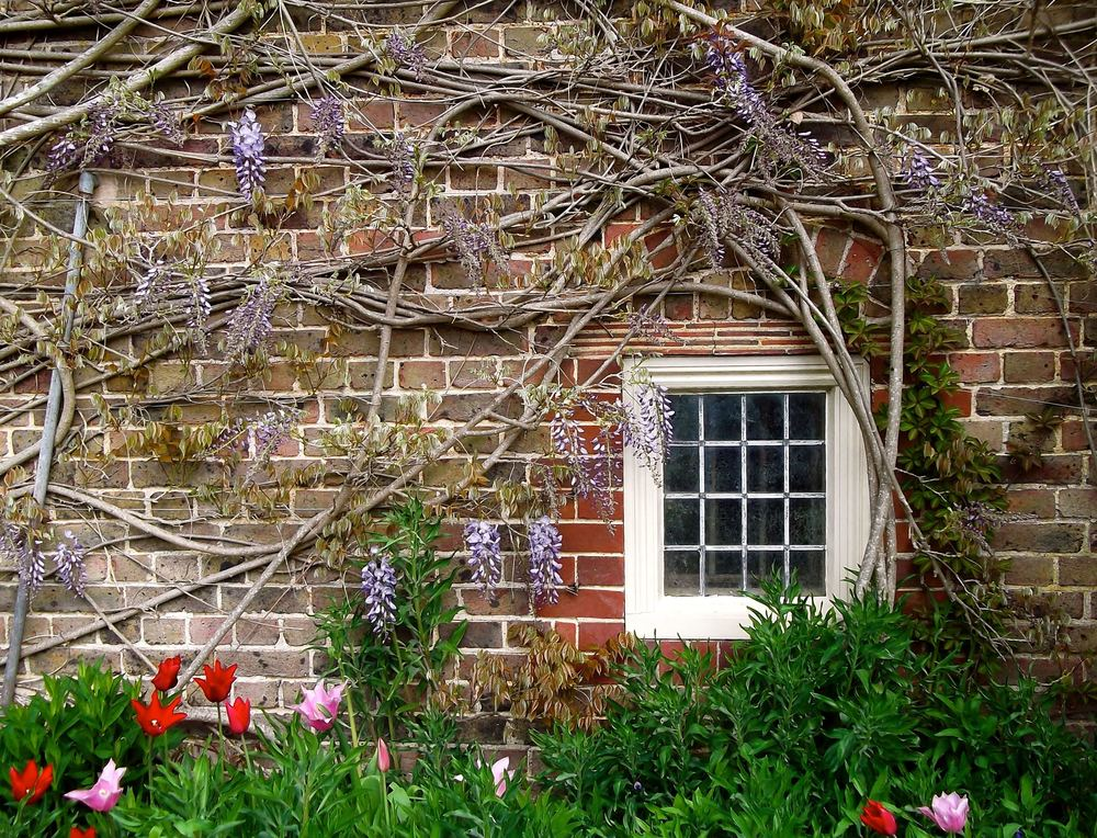 The gardens - and tulips - at Standen