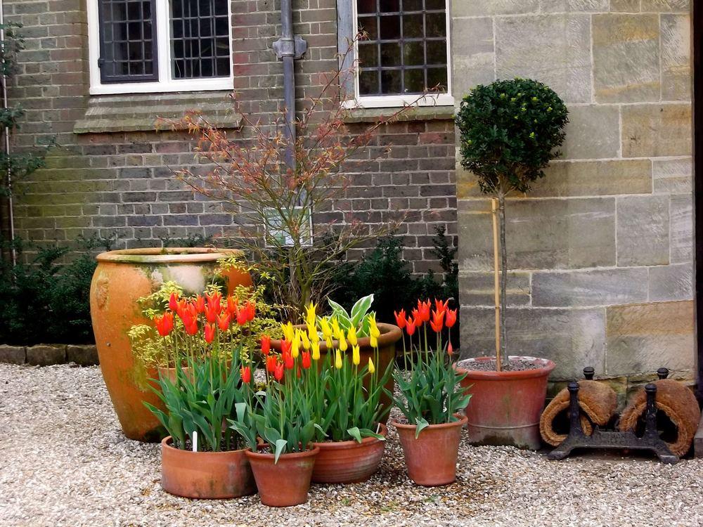 Standen_Tulip_courtyard_pots.jpg