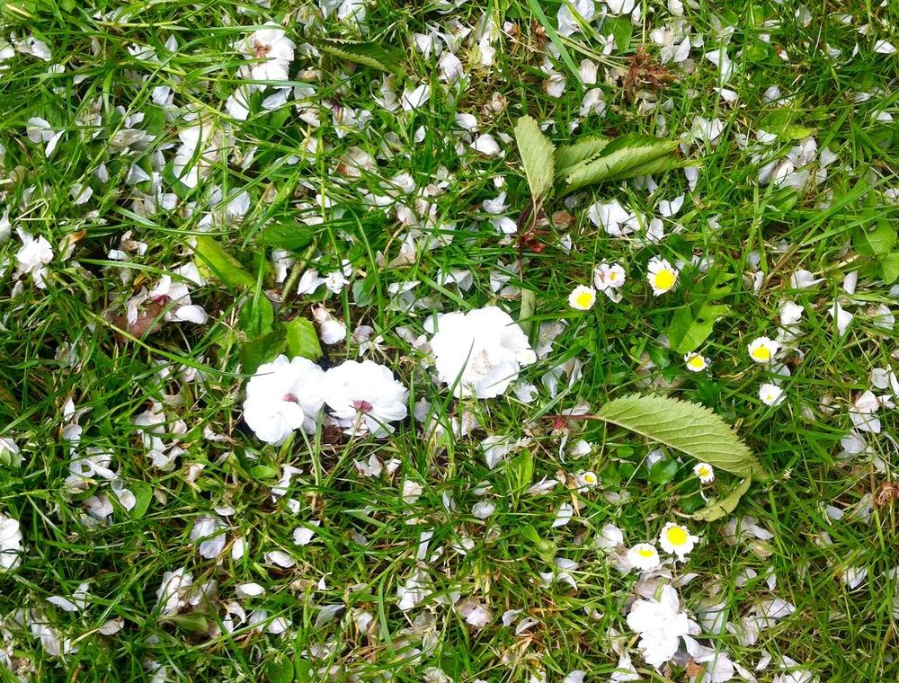 GrassBlossomStorm.jpg
