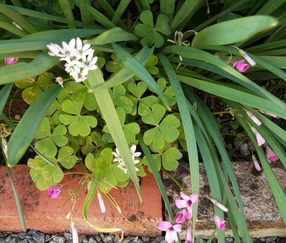 flowerbeds.jpg