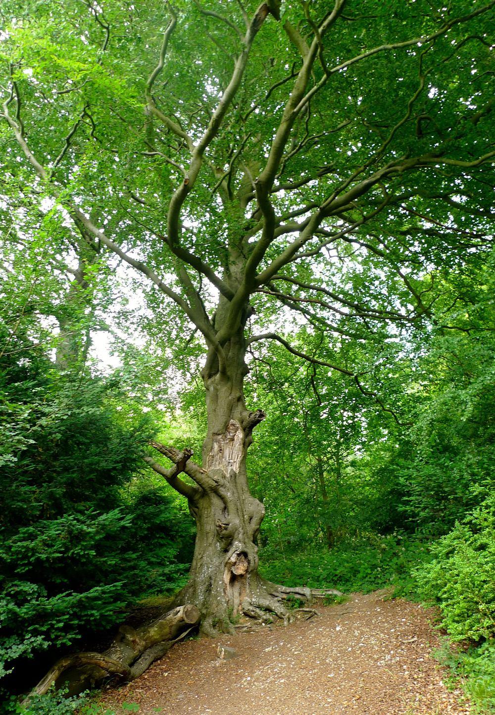 TreesatBoxHill.jpg