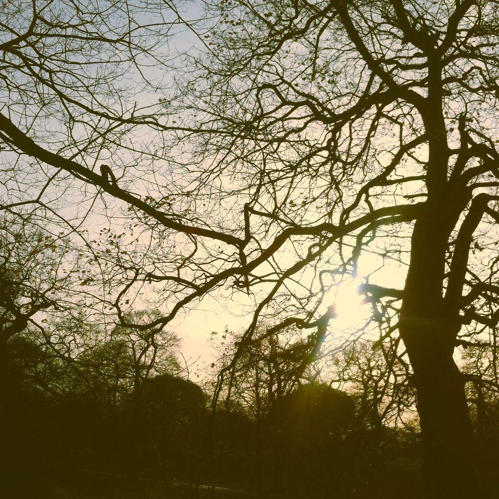 TreesinGreenwichPark.jpg