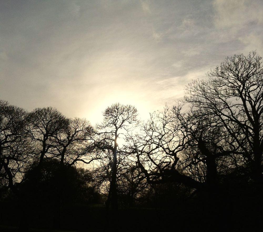 LacyTrees.jpg