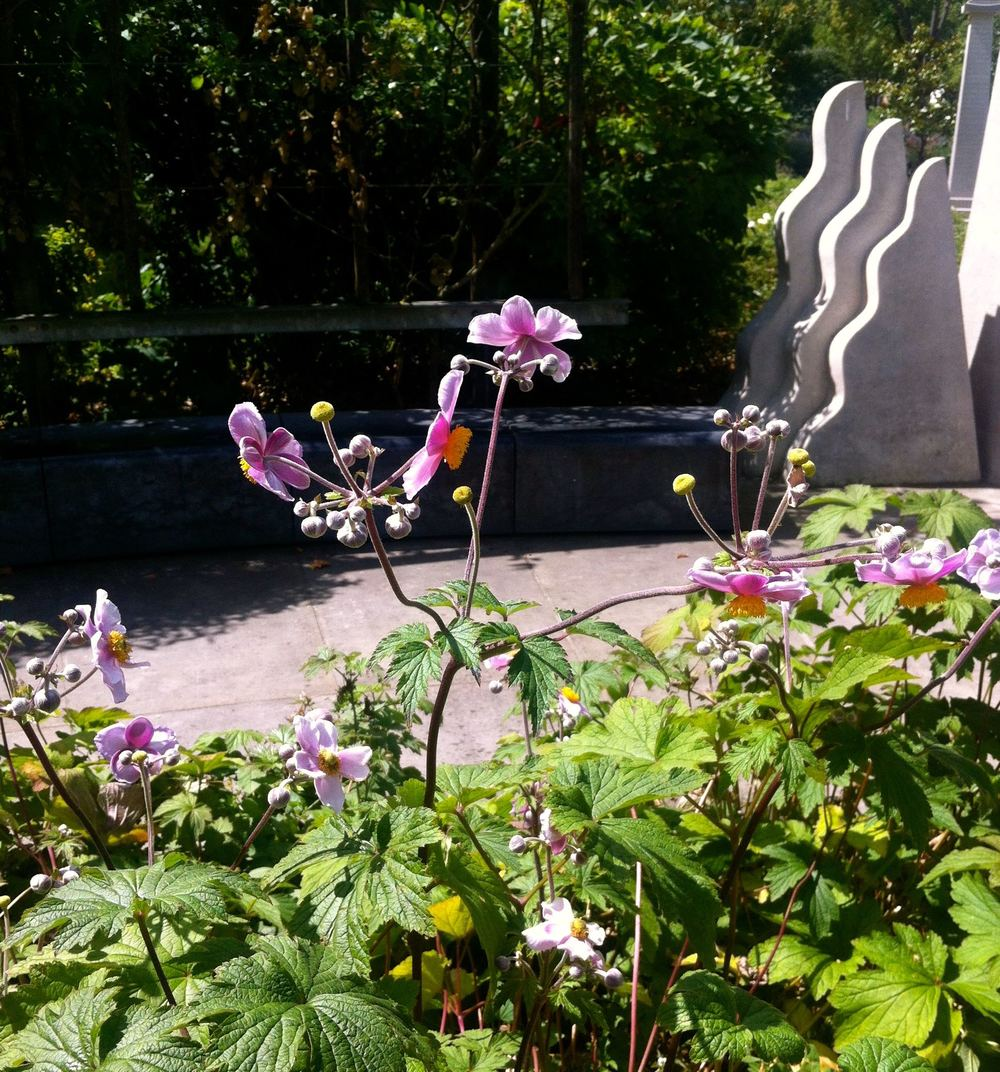 August: Lunch in the Tibetan Peace Garden