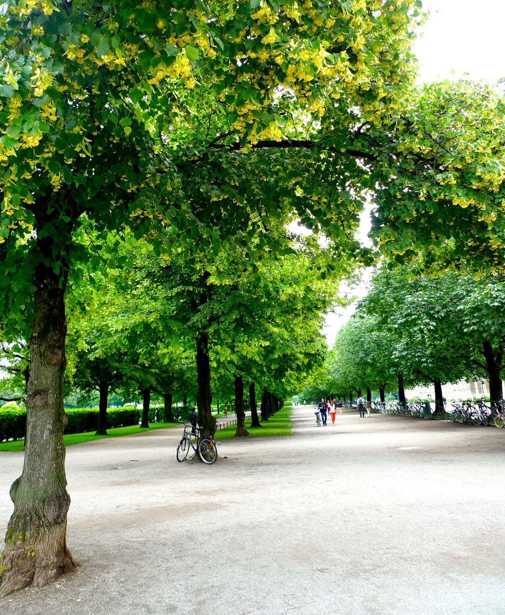 Avenueoftrees