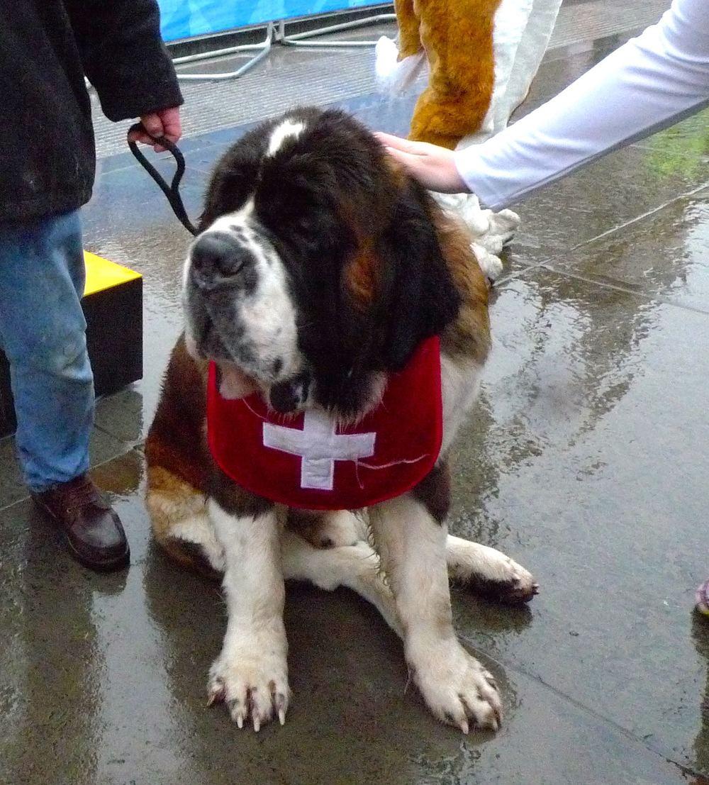 Rescuedogs.jpg
