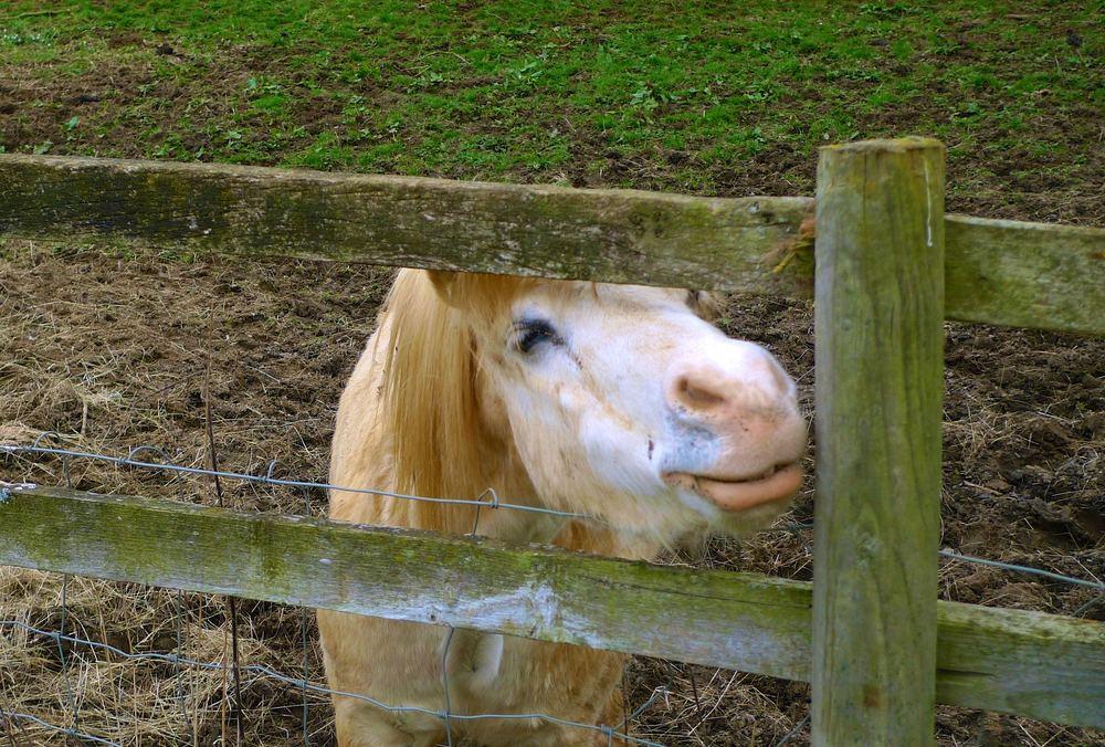 smiling pony