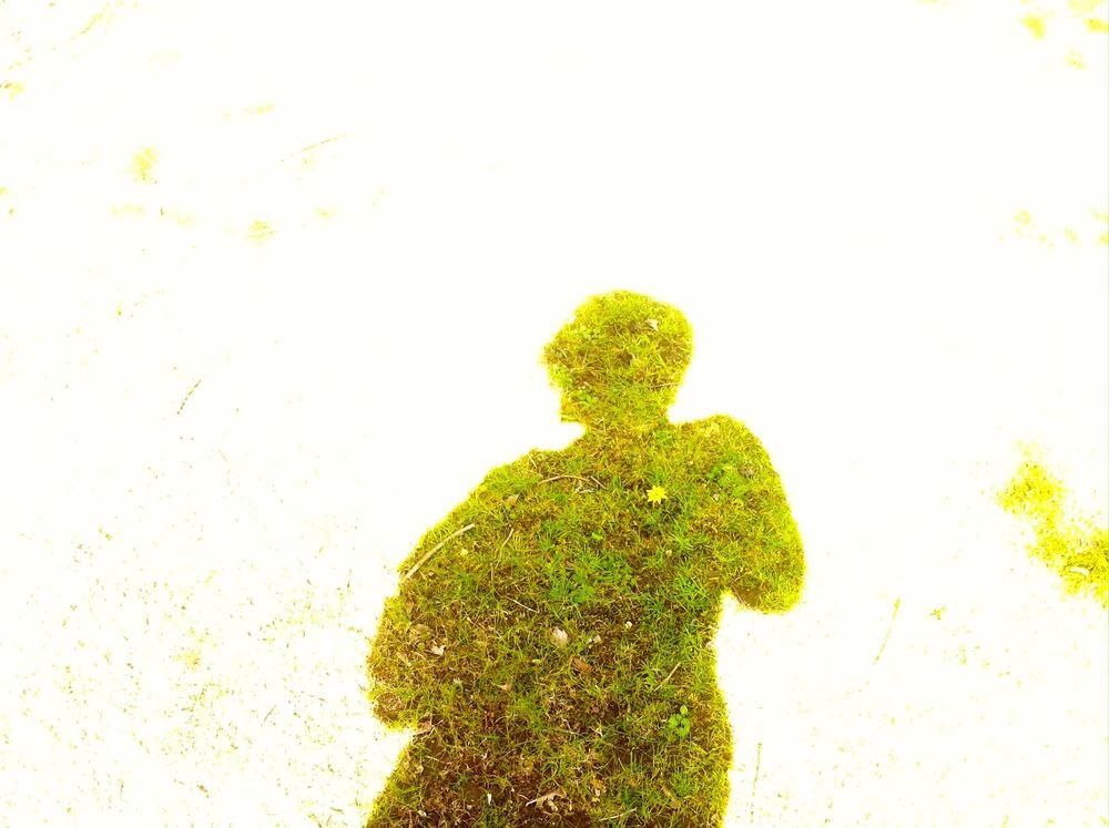 a grass silhouette