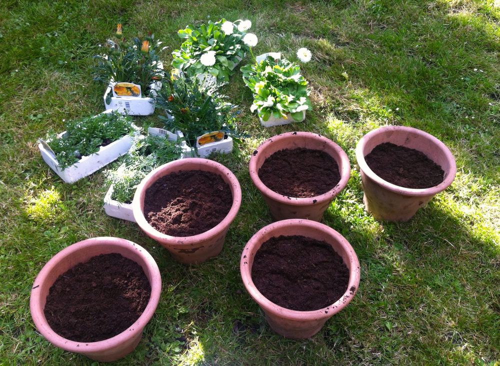 five pots, lots of plants some sun and the will to have some pretty pots on the patio