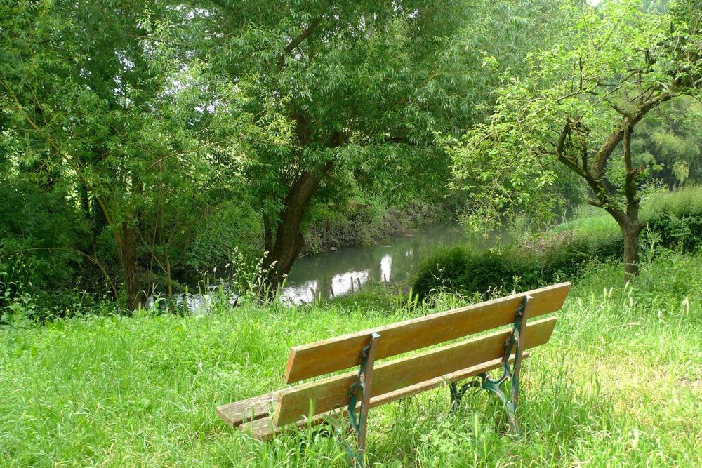 A bench with a view and scents of elderflower