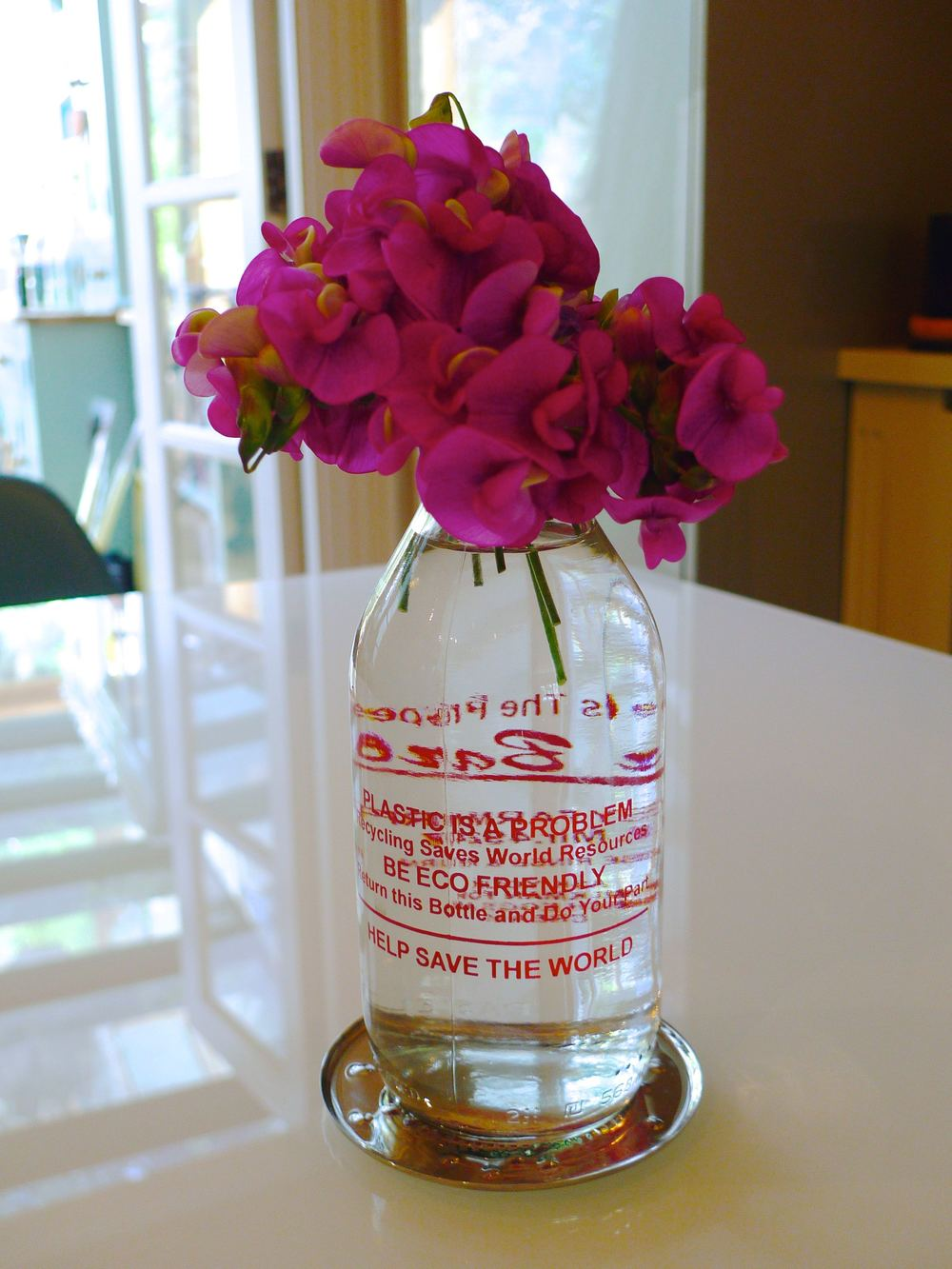 sweet peas in a milk bottle