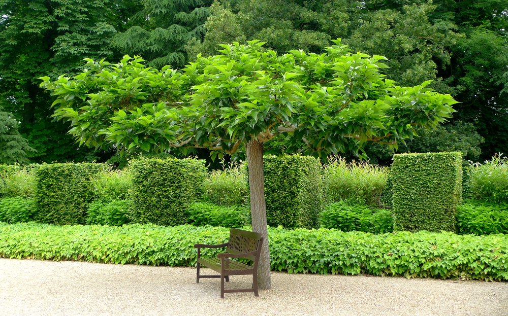 A tree with a bench
