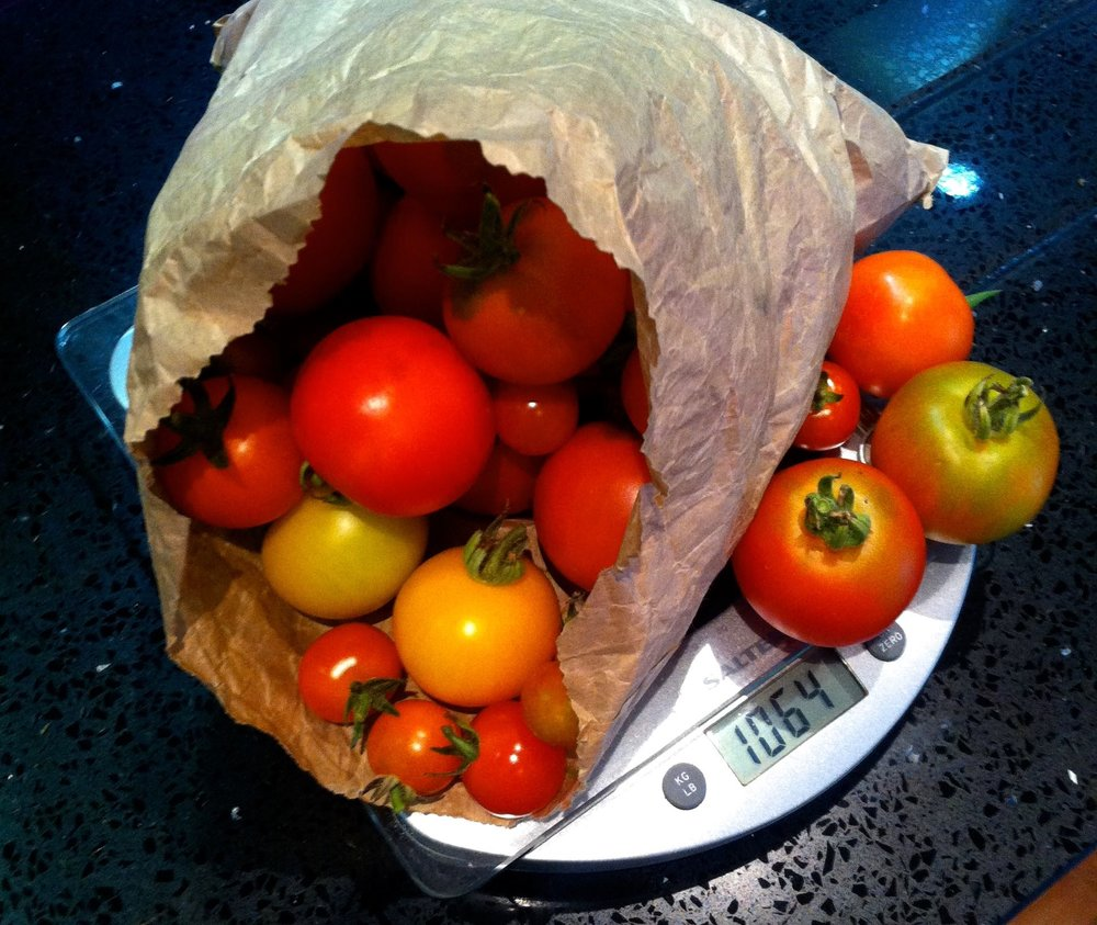 a kilo of home grown tomatoes