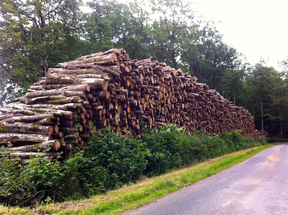 An even larger log pile